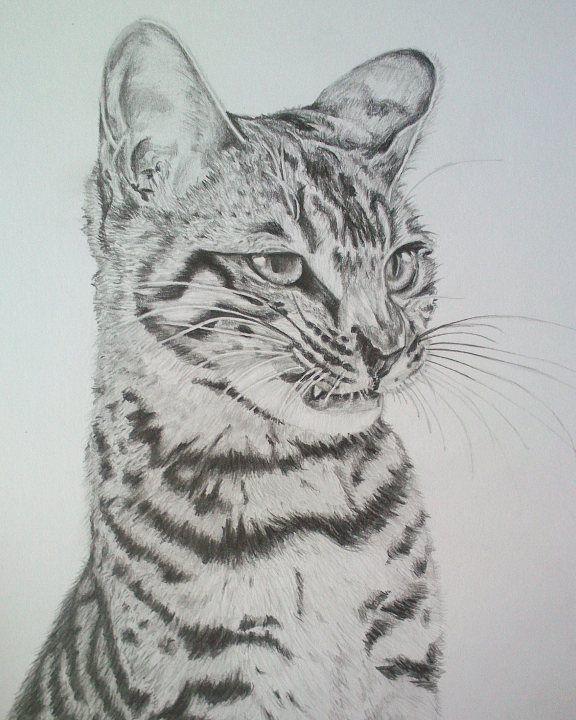 Cica, A4 rajz