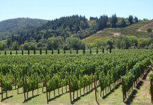 Discover Wine Wednesday – Napa Valley Wine Region