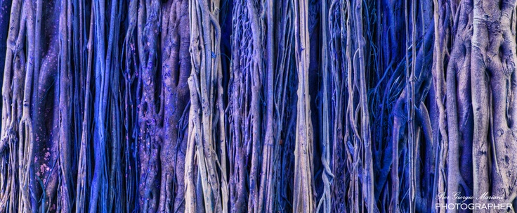 Blue trees for your home wall - http://www.piergiorgiomariani.it  #poster #print #canvas #wallpaper