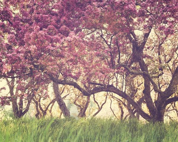 Cherry Orchard, Spring Photograph - Full Bloom - Spring, Pink, Pastel, Nursery Art, Feminine, Girl's Room Wall Decor, Nature Photography. $30.00, via Etsy.