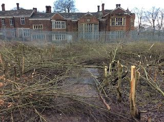 Restoring a rose garden at Hopwood Hall