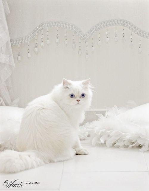white on white :)