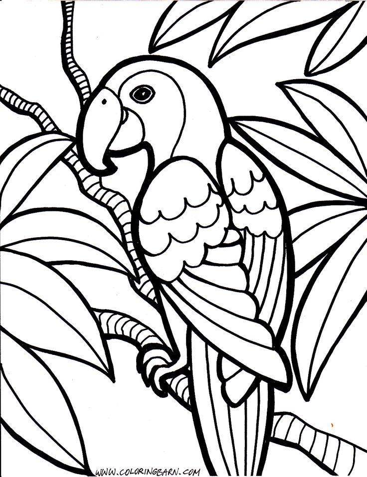 Die Besten 25 Ausmalbilder Papagei Ideen Auf Pinterest