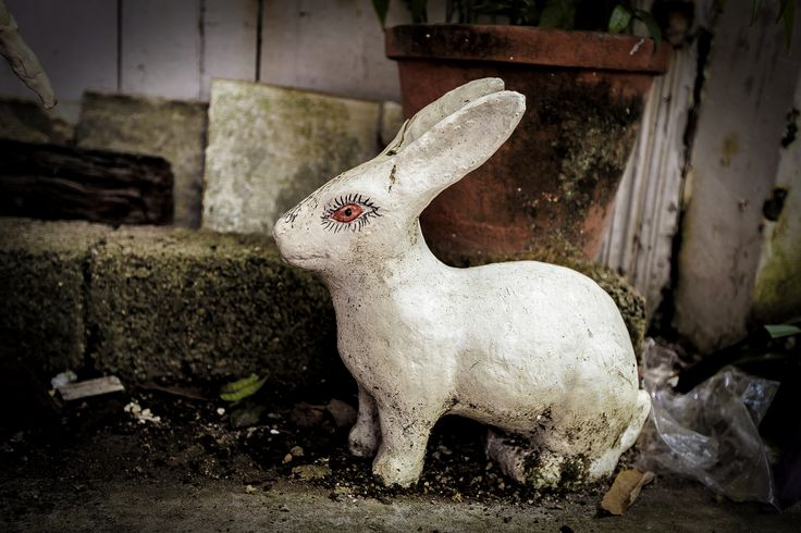 Easter bunny by Eugen Chirita on 500px