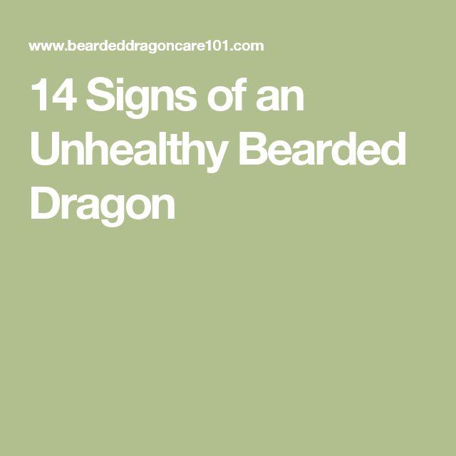 14 Signs Of An Unhealthy Bearded Dragon Bearded Dragon. Síntomas Signs. Enthusiasm Signs Of Stroke. Flower Signs Of Stroke. Cottage Signs Of Stroke. Seating Signs Of Stroke. Solar Plexus Signs. Cool Park Signs Of Stroke. Mania Symptoms Signs Of Stroke