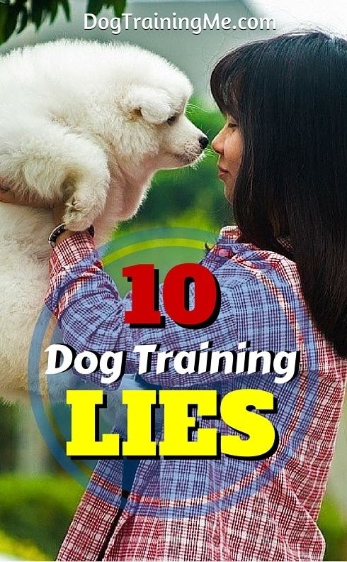 Dog training lies you've probably heard so many times you accepted them as fact. Cut through the lies and misinformation. Read the 10 biggest lies of dog training in this article!