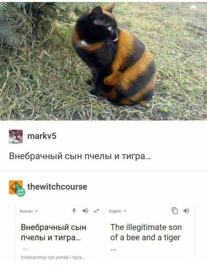 So apparently there is a whole thing happening with Russian cats on tumblr. I don't know what it's about but it's great.
