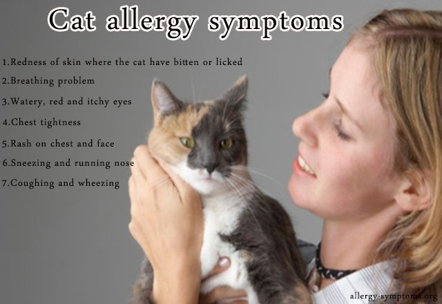 Cat allergy symptoms  Cats are more commonly kept as pets in most of the houses. But for some people these cats can turn out to be allergic. Cat allergy is more common with people than dog allergy.  http://allergy-symptoms.org/cat-allergy-symptoms/