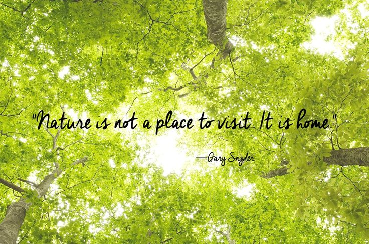 Nature is not a place to visit. It is home.  (Beauty Quotes)