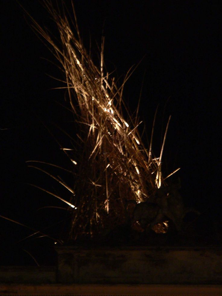D&M Starn - The Big Bamboo - Rome