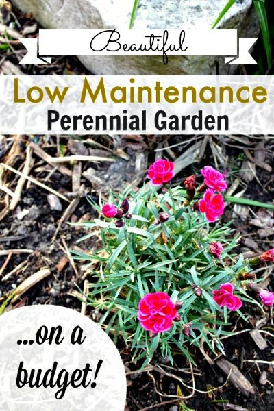 59 best flowers plants images on pinterest gardening for Low maintenance perennial flower bed