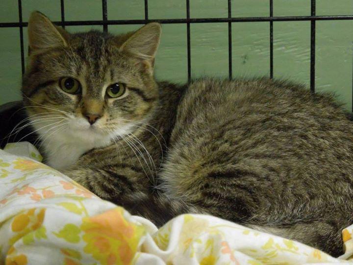 URGENT CATS & KITTENS of PCAS - Advocates for Shelter Animals of Poca.hontas Co., WV