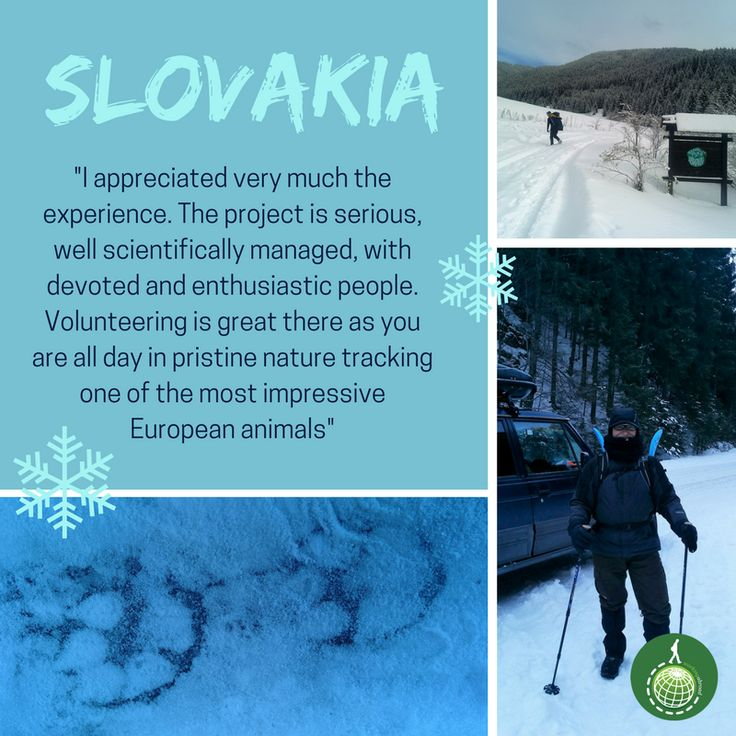Josep Cerdà was part of #wolf tracking and research, as a volunteer at our White Wilderness project in the Carpathian mountains of #Slovakia last winter 🐺 Join them this coming season!