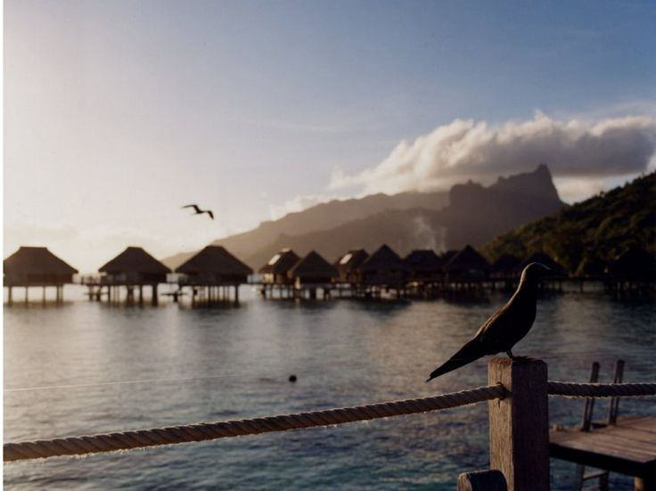 Guests at the Hilton Moorea Lagoon Resort and Spa stay in 54 overwater bungalows.: Favorite Places, Overwater Bungalows, Hilton Moorea, Favorite Trips, South Pacific, International Places, 54 Overwater