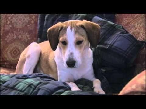 Miracle Dog Daniel Survives Alabama Gas Chamber