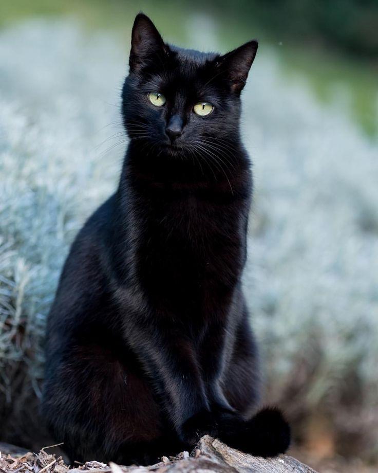 Картинки с черной кошечкой