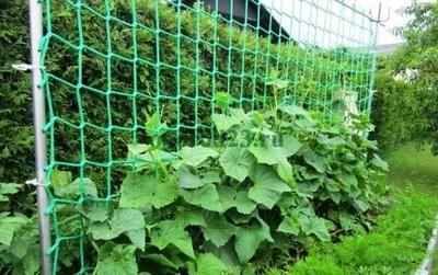 Небольшие участки обязывают экономно использовать территорию. Шпалеры позволяют выращивать овощи более компактно. Эти приспособления отлично подходят для индетерминантных сортов помидор и для огуречных плетей. Предлагаем несколько интересных идей для теплиц и варианты для открытого грунта.  Достои