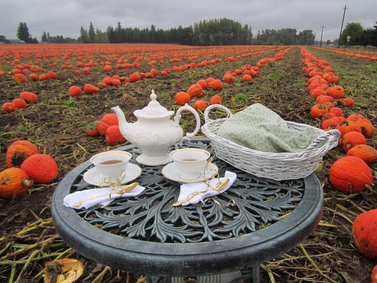 tea in a pumpkin field
