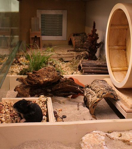 Rattie and Gerbil Cages  This looks so cool! My gerbils would love it (they already have the wheel).