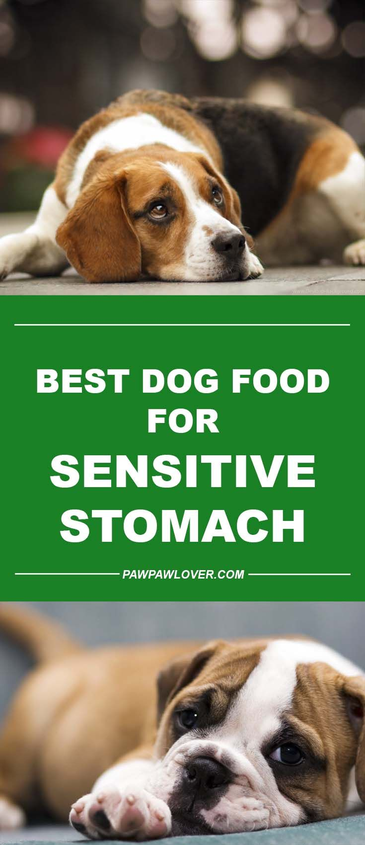 Best dog food for sensitive stomach diarrhea canned