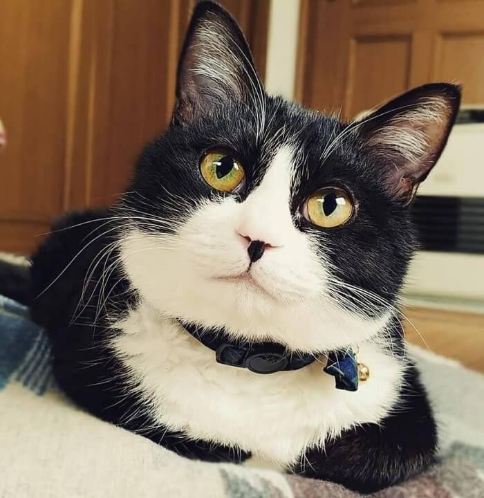 320 Asian Cat Names Japanese And Korean Cat Names Asian Cat Cat Names Cats And Kittens