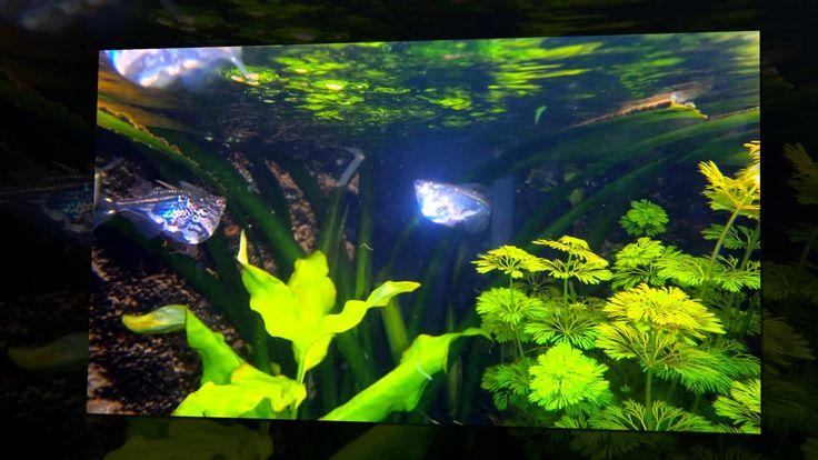 Aquarium vissen foto's in een video slideshow