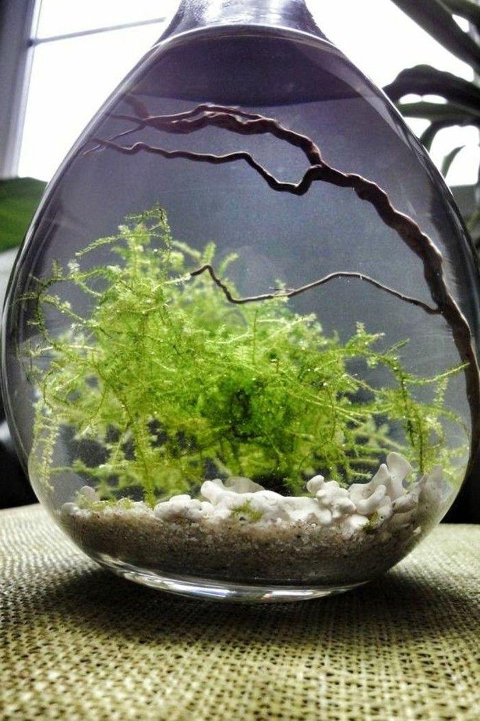 Aquarium Birne Meerespflanzen Aste Kleines Gestalten Einrichten