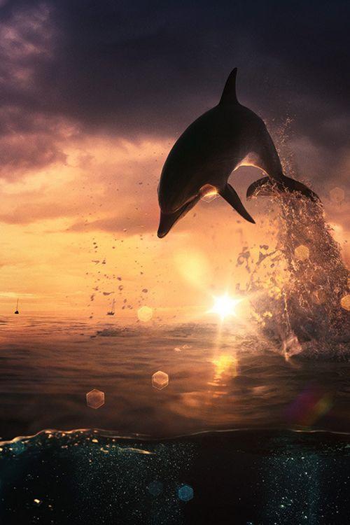 ♀ ocean animal Sunset Jump Beautiful dolphin by Vitaliy Sokol