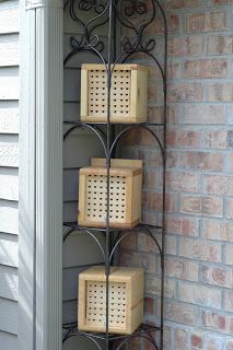 mason bee keeping easy way to get honey and to store up for winter or an emergency