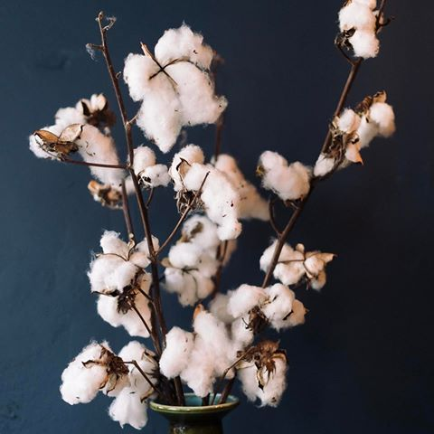 It's a bit foggy today in Melbourne! Here's some botanical inspiration to match the mood. | Cotton branches