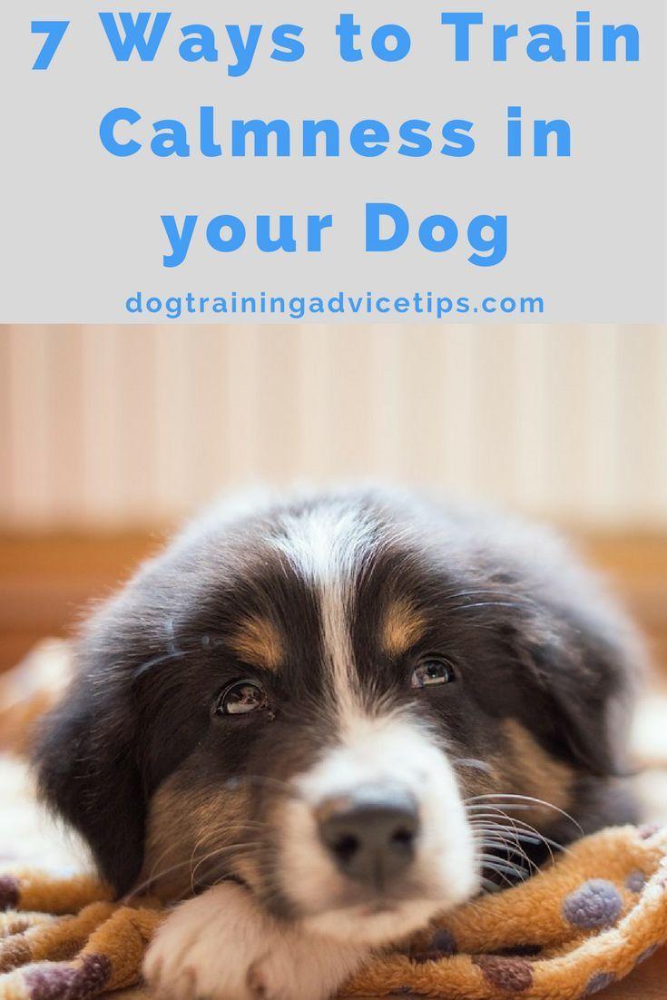 7 Ways To Train Calmness In Your Dog Dog Training Dog Training