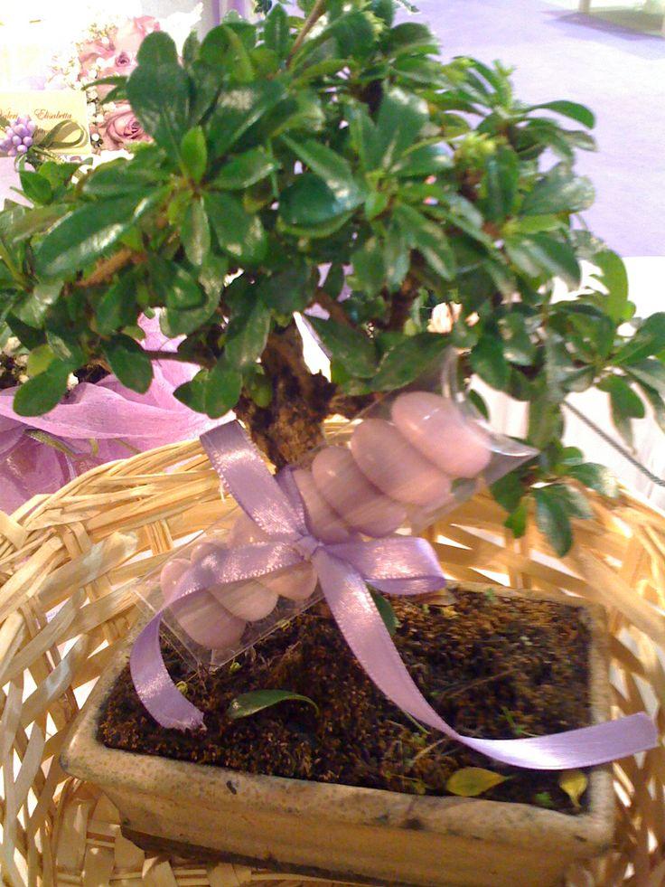 Bonsai bomboniera...un ricordo da accudire! <3