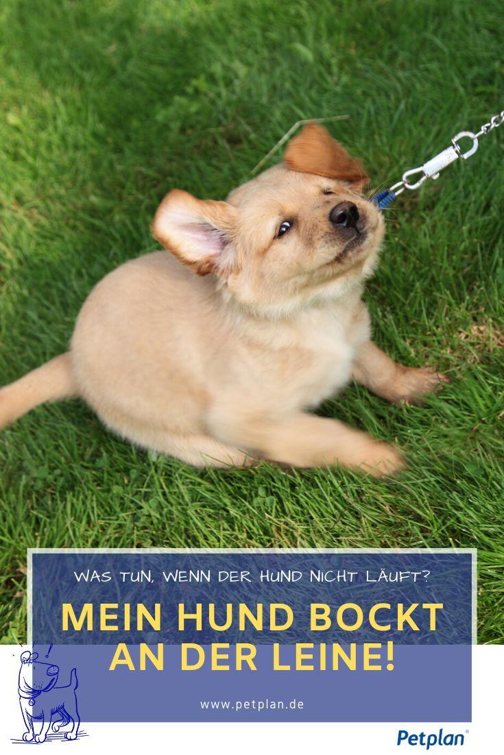 Pin Auf Hunde Erziehung