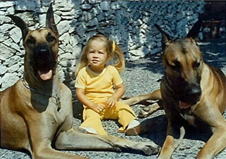 Graceland watch dogs for Lisa . /Brutus & Snoopy. Brutus was the dog used in the movie ''Live A Little, Love A Little''.
