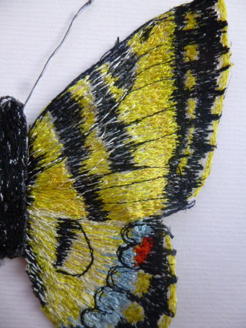 close up of butterfly, machine stitched on lutradur
