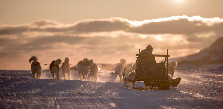 Hundeschlitten in Grönland mit Husky