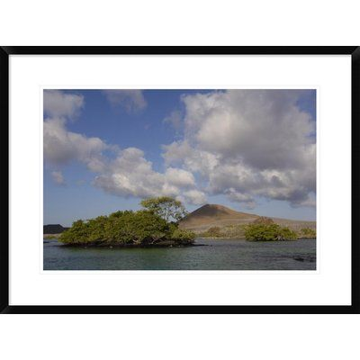"""Global Gallery 'Palo Santo Trees' Framed Photographic Print Size: 22"""" H x 30"""" W x 1.5"""" D"""