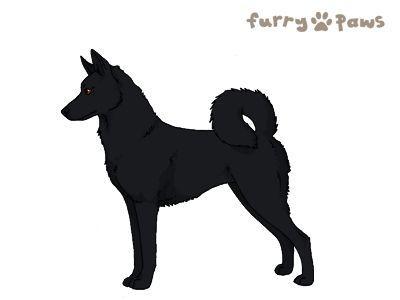 Furry Paws // WCT Kip's Kayyavr [3STM 12HH 1.495] *BoB*'s Kennel