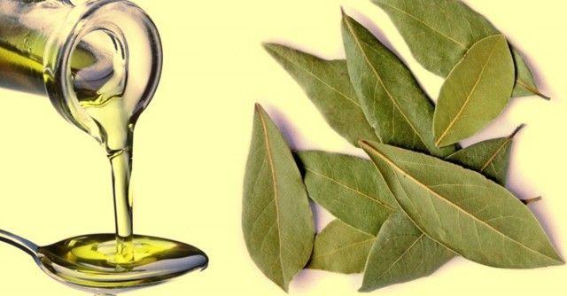 Лечебные свойства лаврового листа: 5 простых рецептов 0