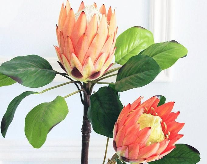 King Protea Artificial Protea Red King Protea Single Stem In 2020 King Protea Protea Plant Leaves