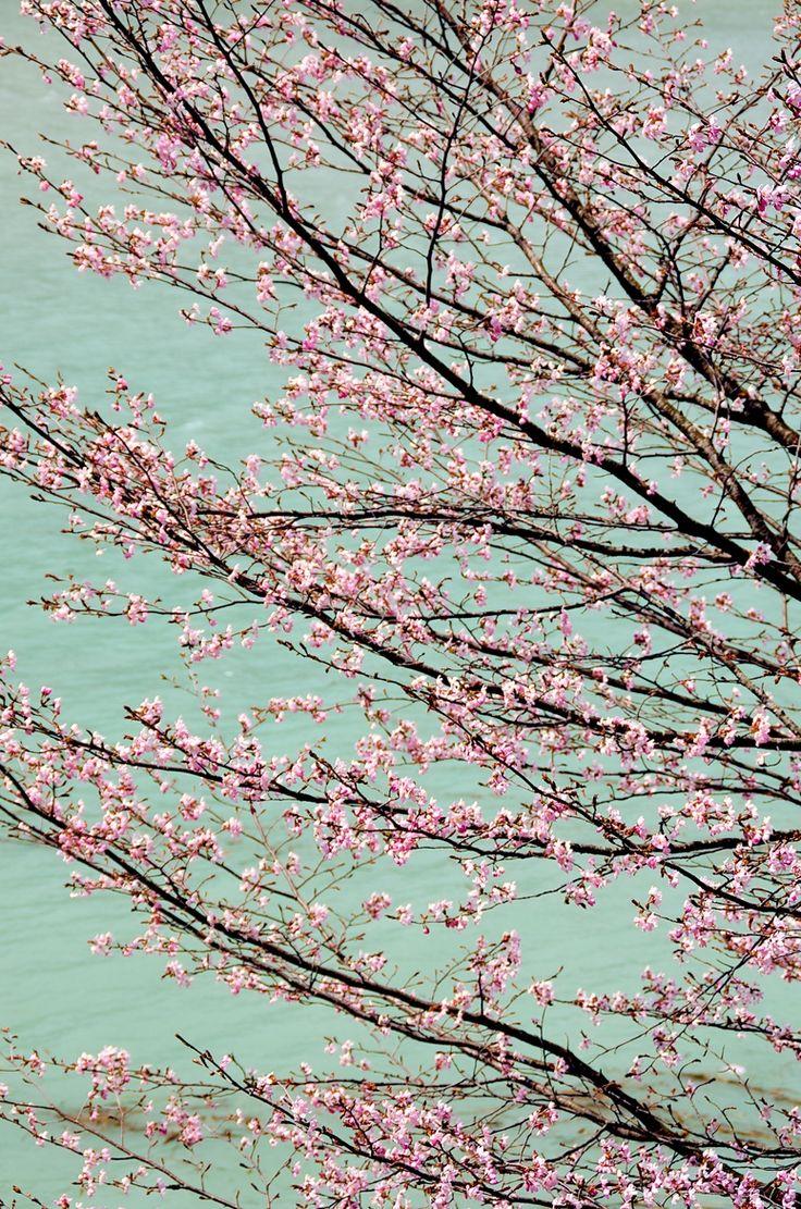 Spring's Glory