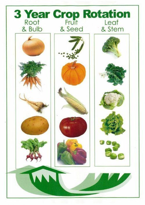 Garden Rotation: Gardens Ideas, Rotator Charts, Growing Vegetables, Crop Rotator, Squares Foot Gardens, Life Cycling, 3 Years, Plants, Years Crop