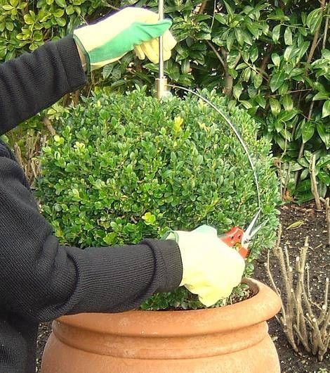 Buchsbaum-Schablone zum einfachen Formschnitt von Buchsbaumkugeln