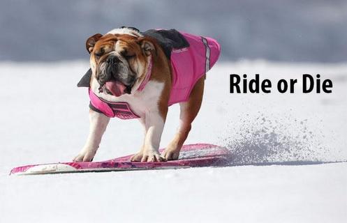 Ride or Die Sunshine Village #Ski & #Snowboard Resort - Google+ #Meme