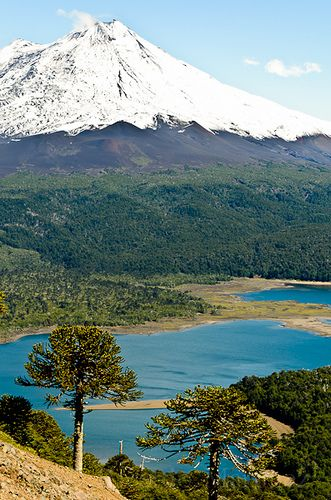 Volcán Llaima al fondo, desde la subida a sierra nevada (Parque Nacional Conguillio, Chile