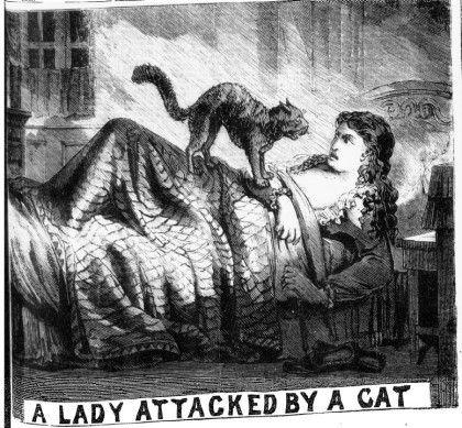 백년전 영국의 고양이사건