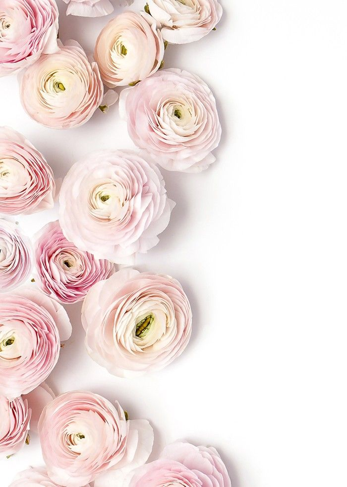 132 best flower arrangements images on pinterest flowers powdery pale pink ranunculus these flowers always make me think of super thin fragile paper mightylinksfo