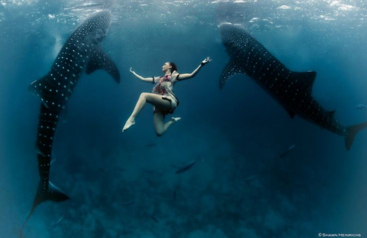 Two models were used for this shoot with whale sharks: Italian model Roberta Mancino (a world skydiving champion) and model Hannah Fraser (professional underwater model).