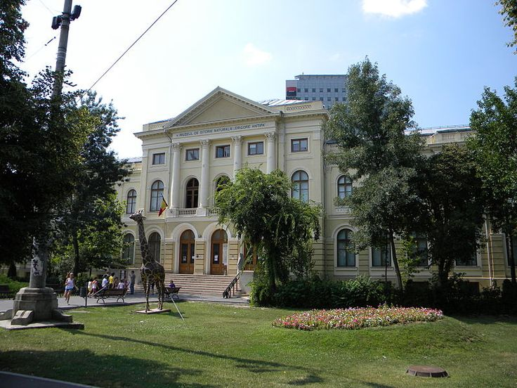 File:Muzeul National de Istorie Naturala, Grigore Antipa, Bucuresti, sect. 1 (imagine cu girafa).JPG
