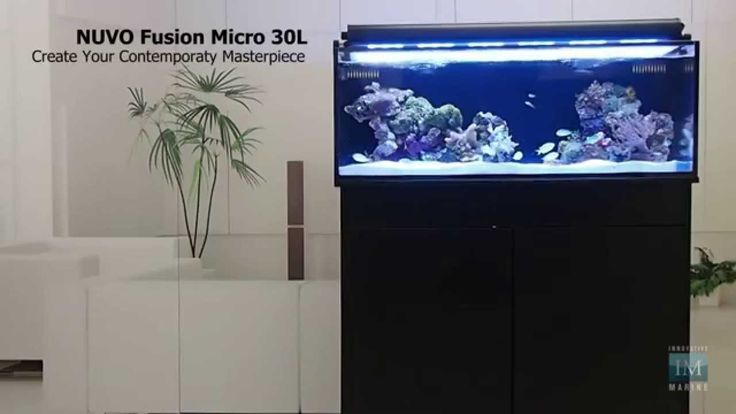 34 best images about fishtanks aquariums on pinterest for Aquarium recifal complet